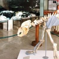 museo_della_grotta