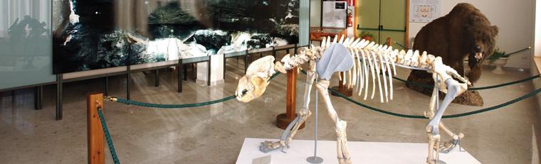 CLAUZETTO (Pn), fraz. Pradis. Museo della Grotta.